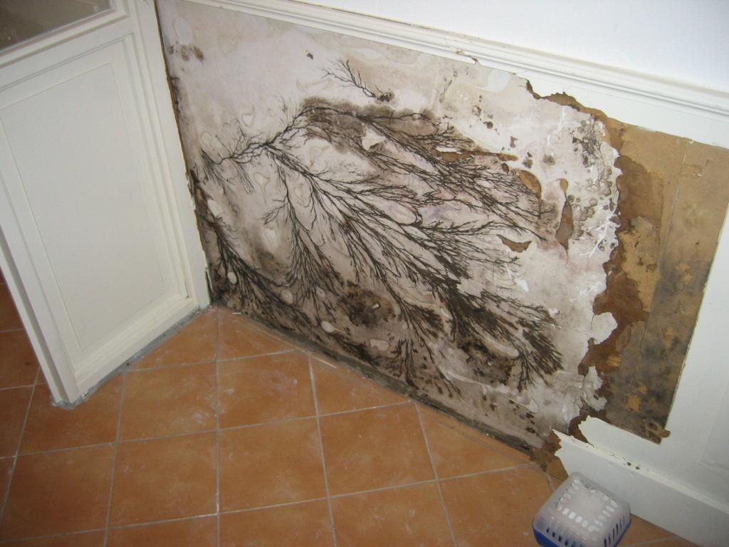schimmel op muur slaapkamer gezondheid ~ pussyfuck for ., Deco ideeën